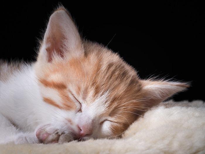 眠る茶白子猫