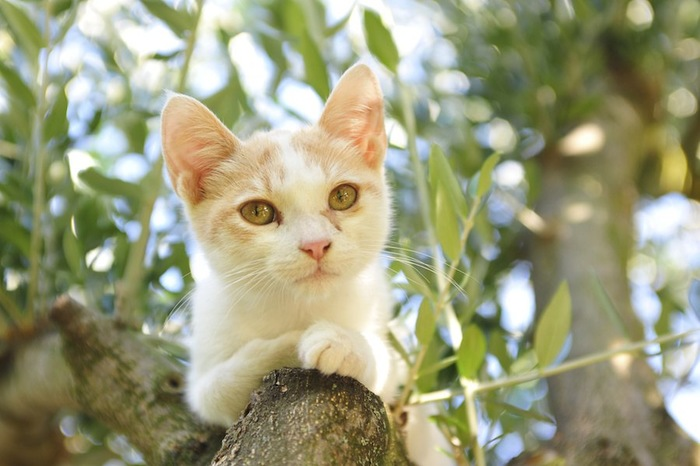 オリーブの木に登る猫