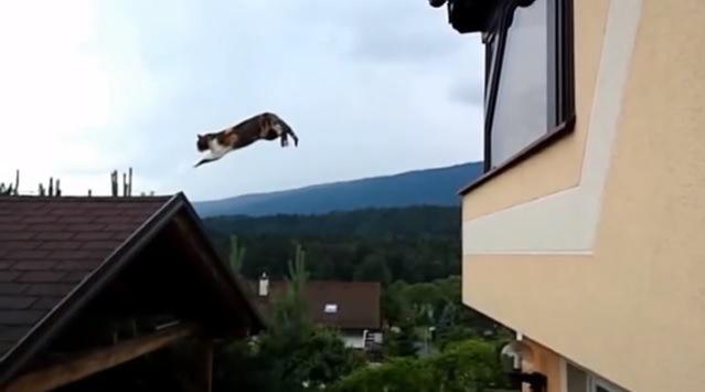 前脚を伸ばす猫