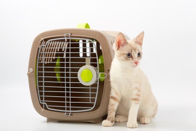#猫とケージ#
