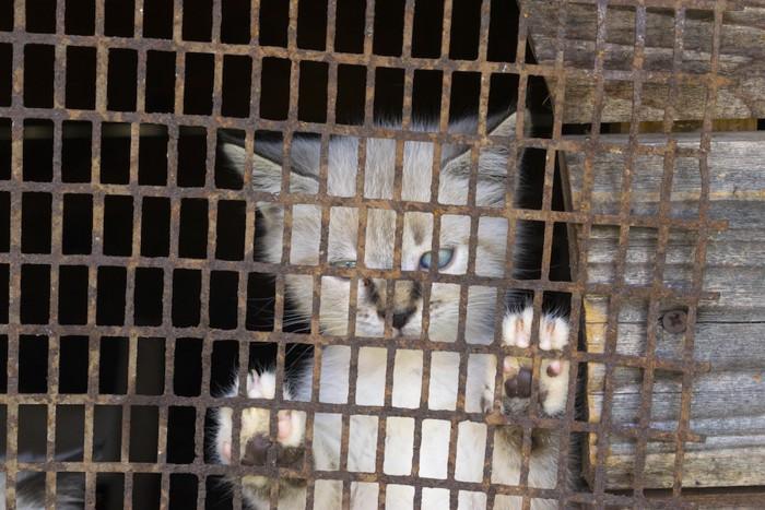 檻に入れられている子猫