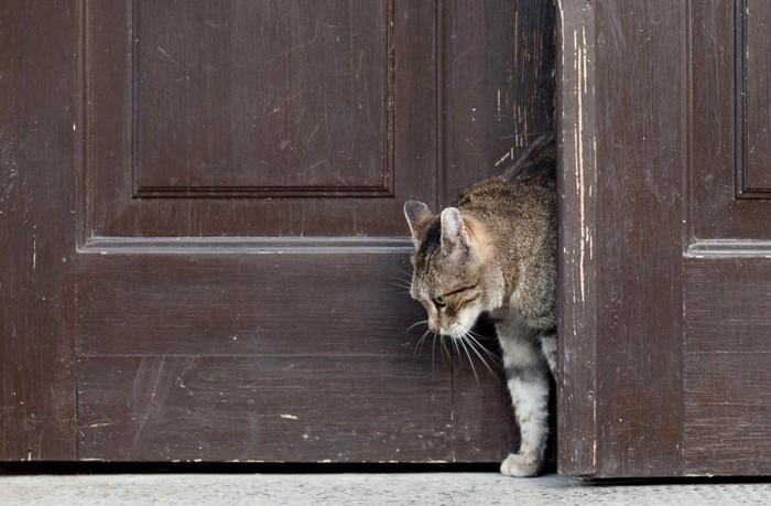 茶色いドアから出てきた猫