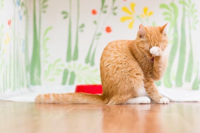 手を上げて顔を洗う猫