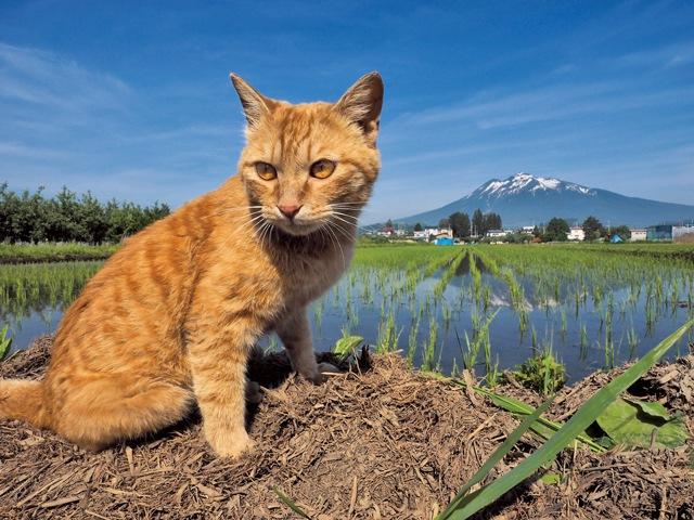 田んぼと猫