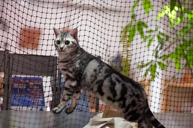 Cat Cafe Cateriam