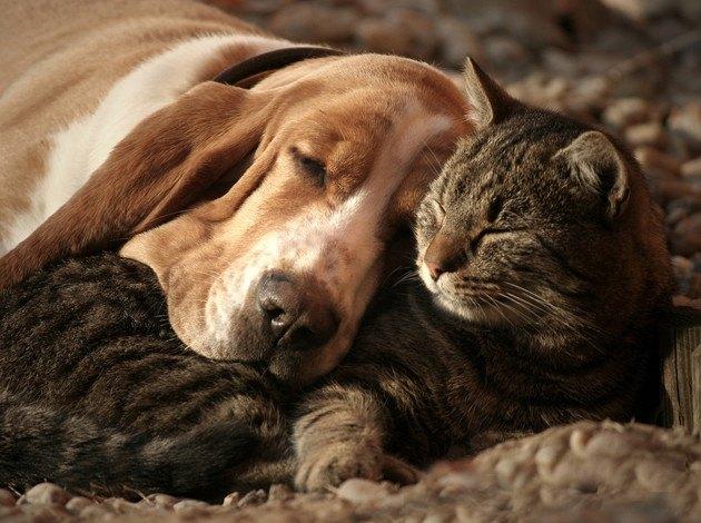くっついて眠る犬と猫の写真