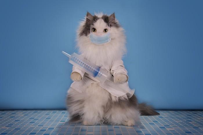 猫の低体温