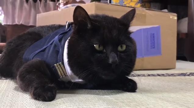 室内で伏せる猫