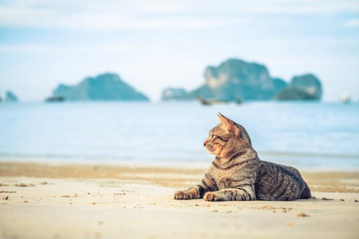 海辺でくつろぐ猫