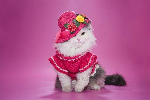 ピンクの服と帽子をかぶった猫