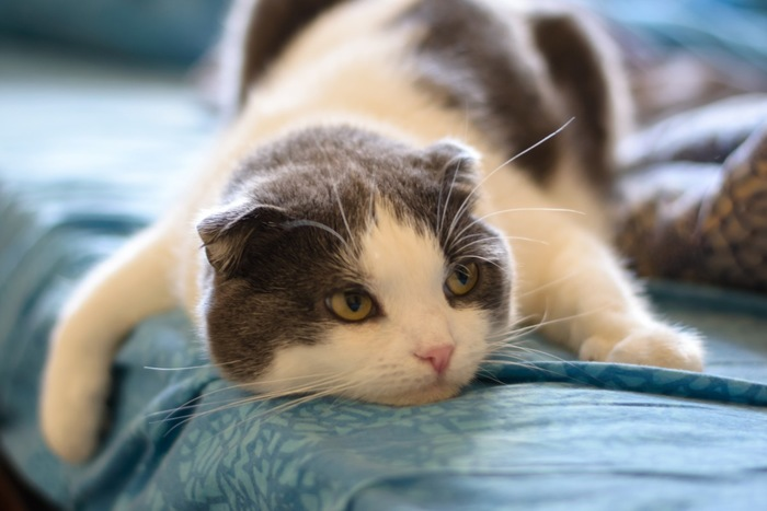 ぐったりする猫