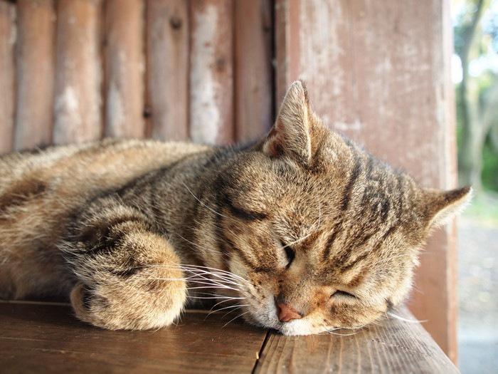 ベンチで眠る猫