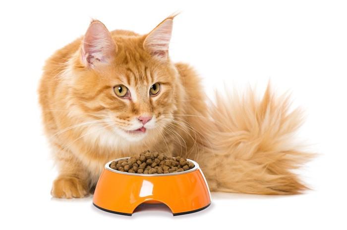 ご飯を食べている長毛猫