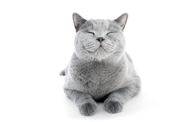 目を細める灰色の猫