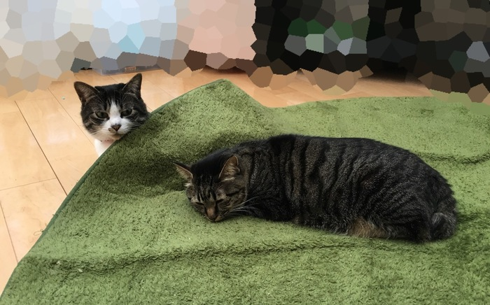 カーペットに寝転がる猫達