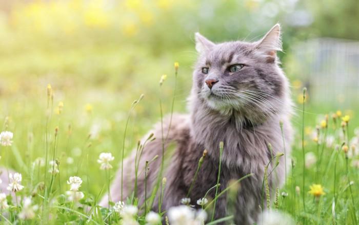 花の香りを嗅ぐ猫