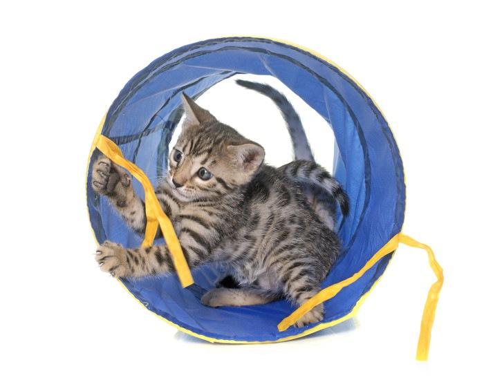 青いトンネル内で遊ぶ猫
