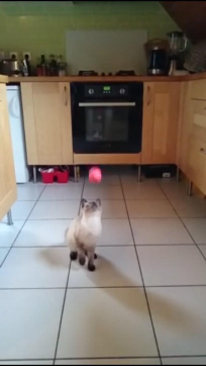 まだ見る猫