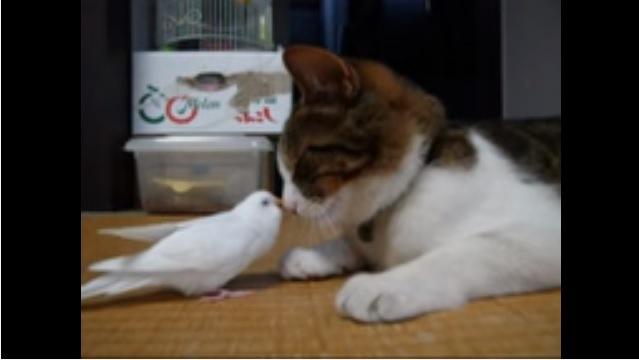 顔を寄せ合う猫と鳥(横から撮影)