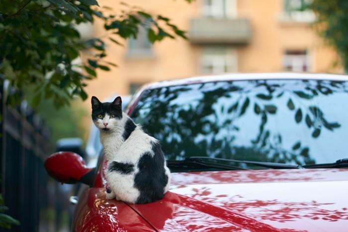 ボンネットに乗っている猫