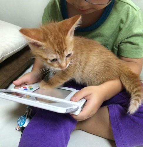ゲーム機と子猫