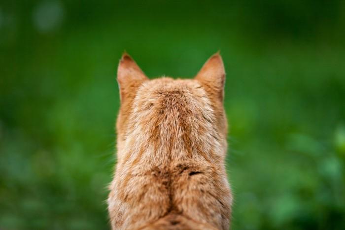 後頭部を見せる猫