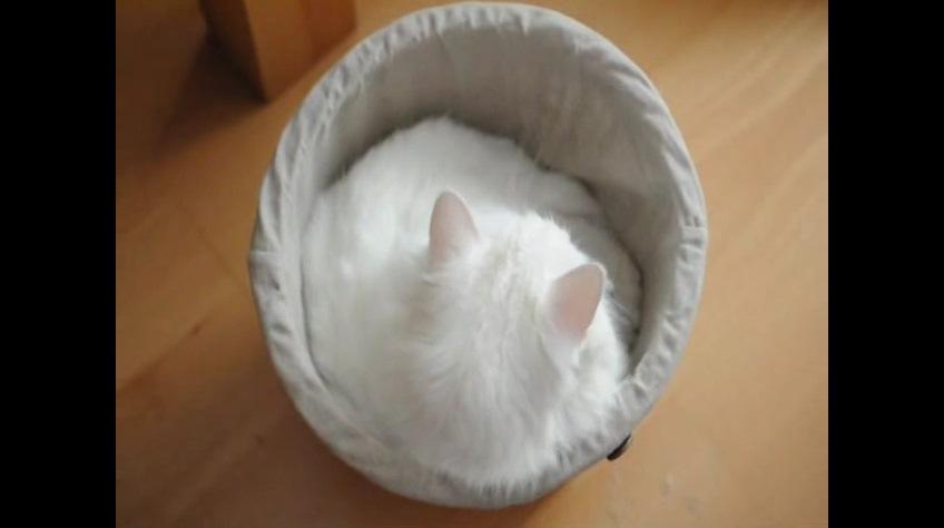 ごみ箱に収まる猫の後ろ姿