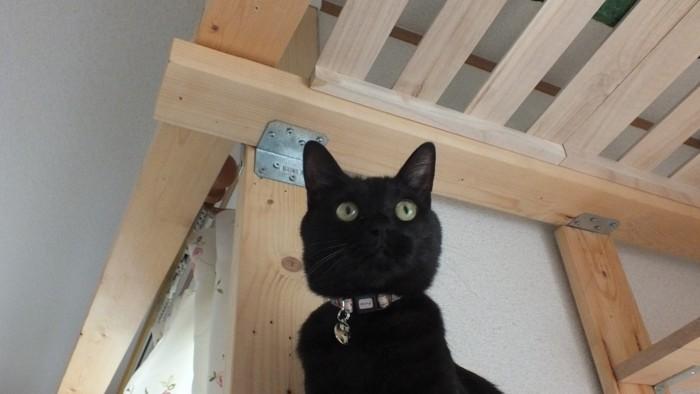 迷子札メス猫