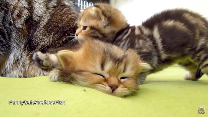騒がしい兄弟猫