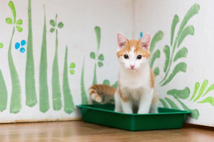トイレに座っている茶白猫