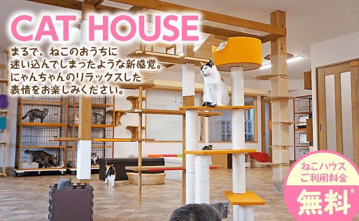 猫ハウス内