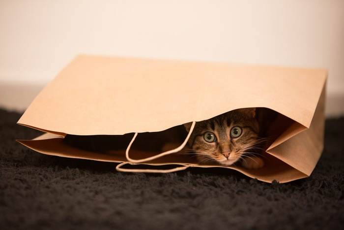 紙袋に隠れている猫