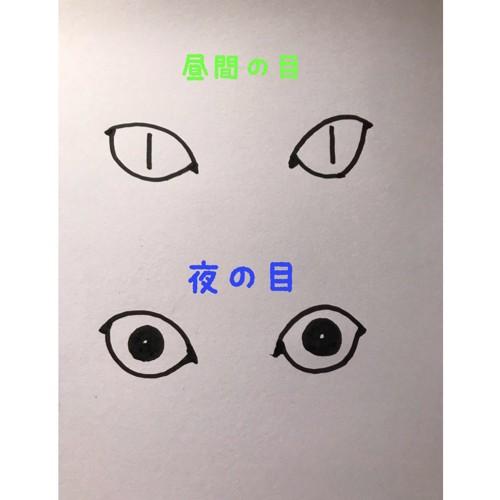 昼の目と夜の目の絵