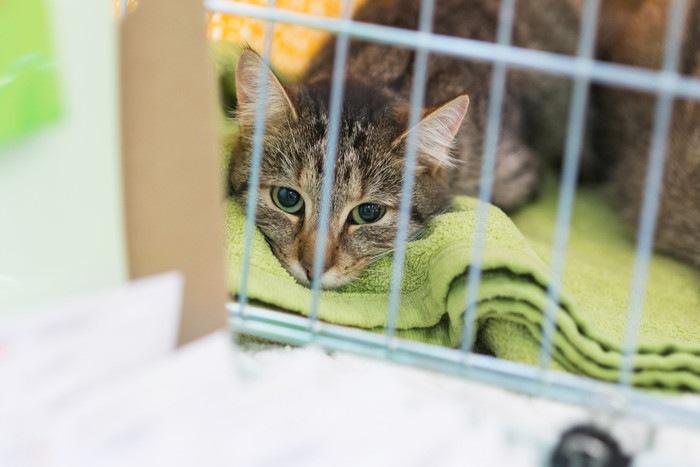ケージの中でくつろぐ猫