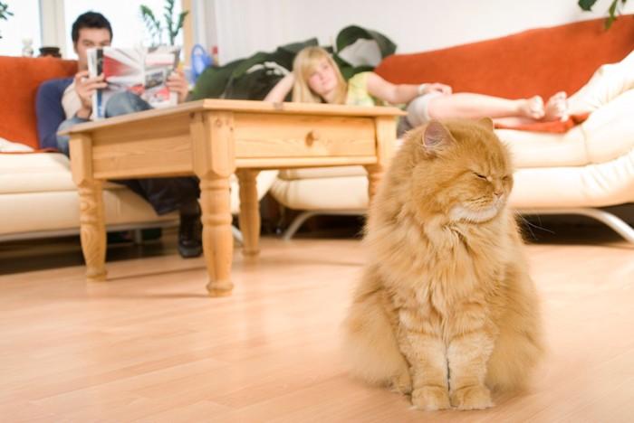 室内で人と離れている長毛の猫