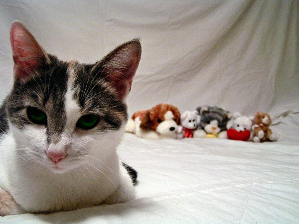 ぬいぐるみを見ない猫