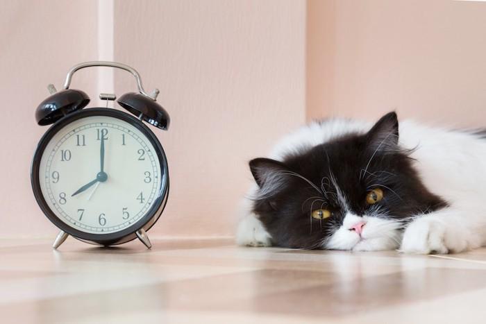 目覚まし時計の隣でくつろぐ猫