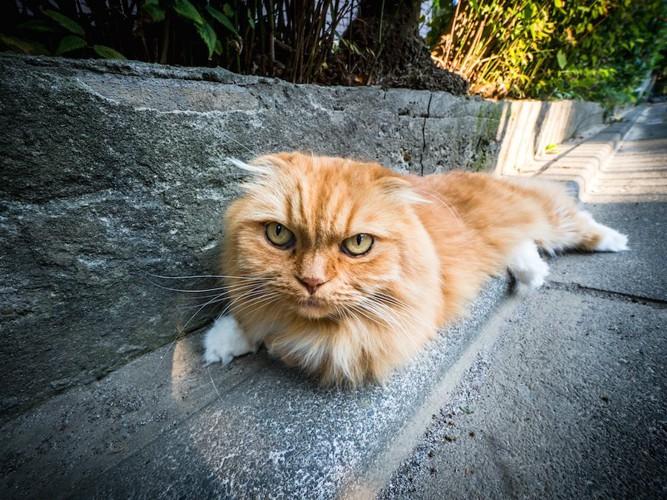 道路の端で休んでいる猫