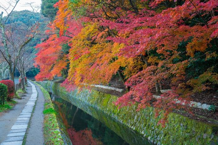 京都の猫スポットである哲学の道
