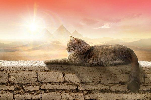 ピラミッドが見える背景の猫