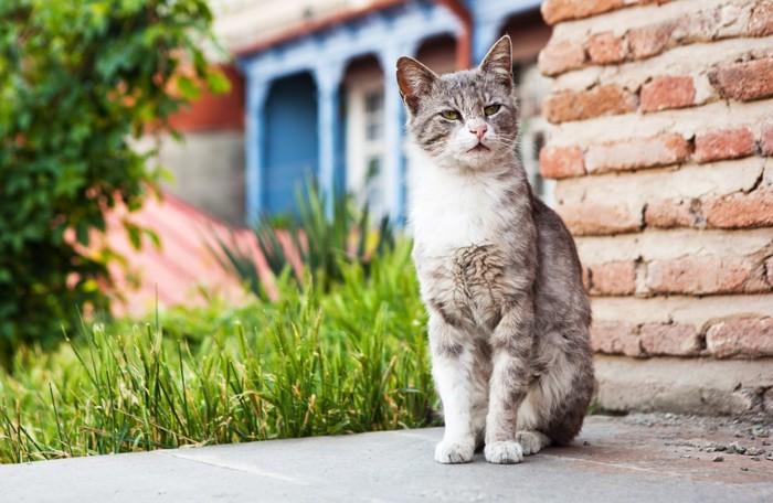 遠くを見つめる猫