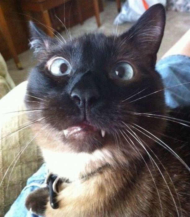 猫の変顔1