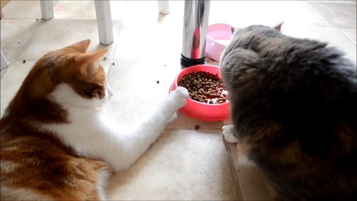 引き寄せる猫