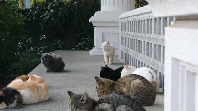奥から歩いてくる白猫
