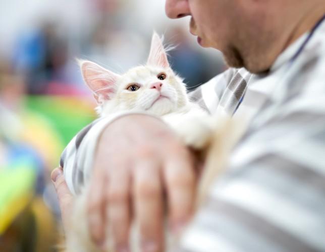 男性に抱かれている子猫