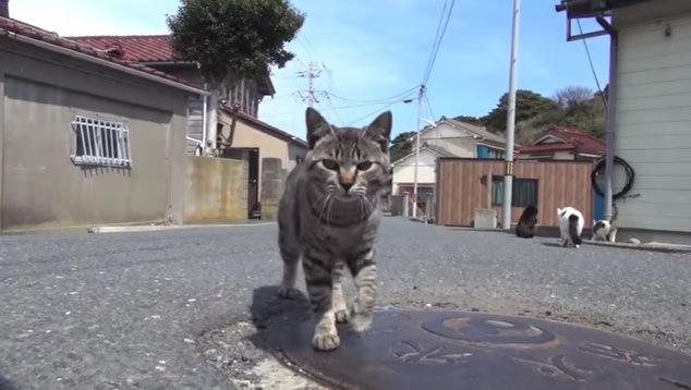 カメラに向かってくる猫