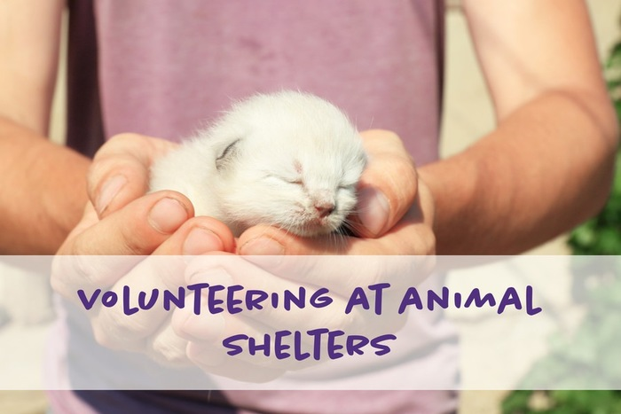 猫シェルターのボランティア