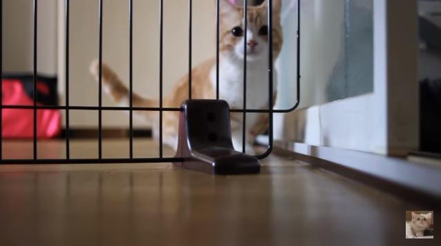 柵の前に座る猫