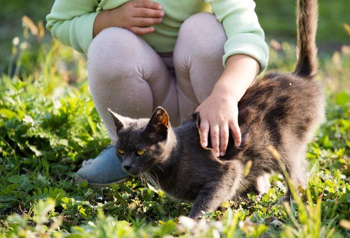 黒猫を撫でる人の手
