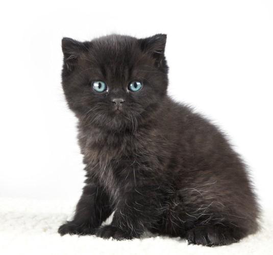 白い背景と黒猫